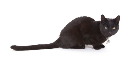 moggi: Black cat lying isolated on white background
