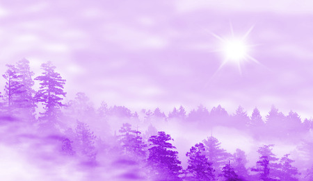 misty forest: Landscape of misty forest at sunrise in purple