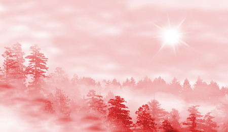 misty forest: Landscape of misty forest at red sunrise