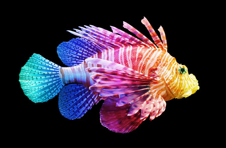 pterois: Pterois volitans, Lionfish - Isolated on black - Unique rainbow Stock Photo