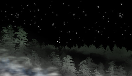 misty forest: Landscape of misty forest at night - concept of mystery