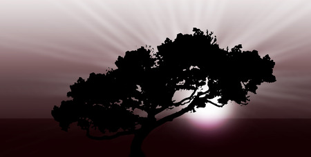 red sunset: Exotic sunrise or sunset - Silhouette of a large tree