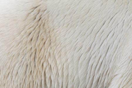 Close-up of the fur of a polarbear Banco de Imagens