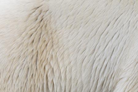 Close-up of the fur of a polarbear Foto de archivo