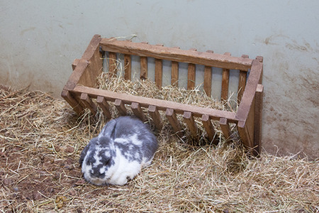 bugs bunny: Rabit resting in front of its food