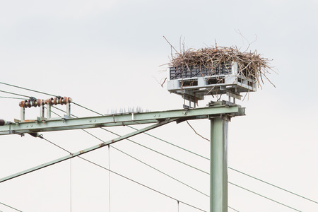 foretop: Stork nest on top of a railroad construction, the Netherlands