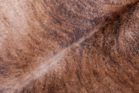 Brown, black and wthie textured cowhide Stock Photo