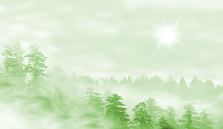 misty forest: Landscape of misty forest at sunrise - concept of mystery - green