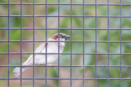 other side of: Sparrow trapped on the other side of the net fence - Selective focus