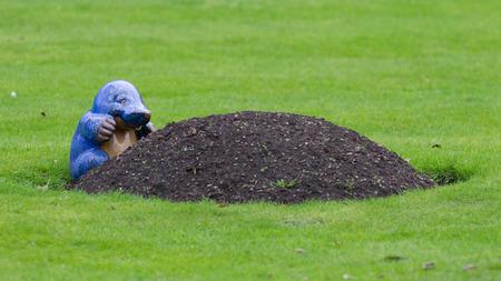 dwelling mound: Blue mole statue poking out of mole mound on grass