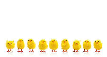 Abundance of easter chicks on a row, isolated Imagens