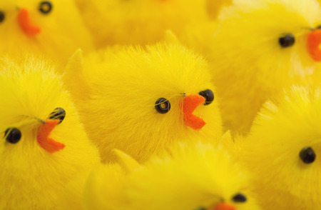 easter chick: Abundance of easter chicks, selective focus, isolated