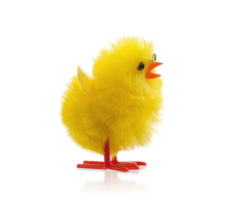 Single easter chick, isolated on a white background