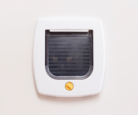 house trained: Inside view of a regular white cat flap on a light door, cat comming through Stock Photo