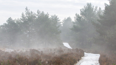 myst: Foggy dutch landscape with a path, winter Stock Photo