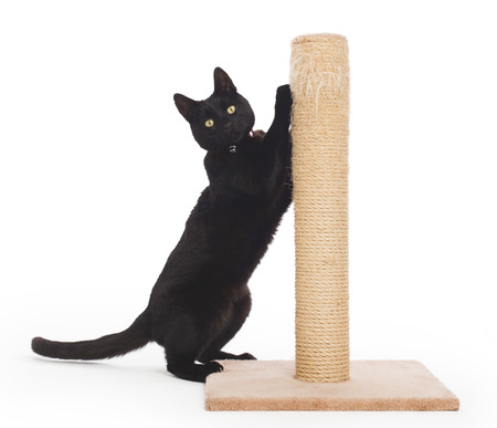 Black cat with a scratching post isolated on white