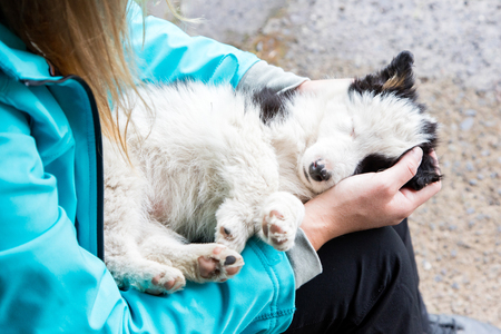 expressionless: Small Border Collie puppy resting in the arms of a woman Stock Photo