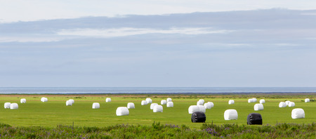 sealed: Hay bales sealed with plastic wrap in the Icelandic field