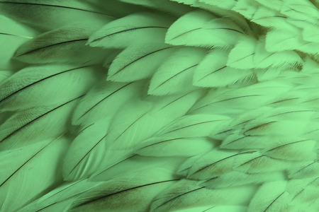Green fluffy feather closeup - Selective focus on some feathers