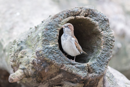 hollow: Sparrow in a hollow tree, selective focus