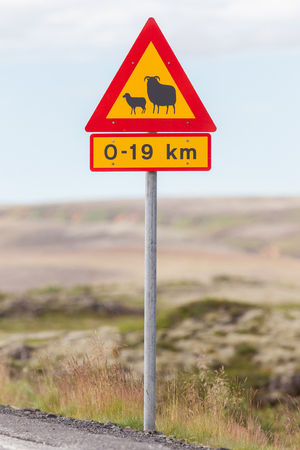 sheep warning: Real Sheep Crossing traffic sign in Iceland