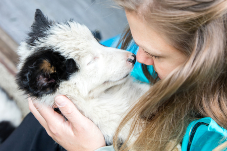 Small Border Collie puppy resting in the arms of a woman Stock Photo