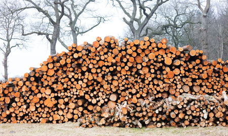holland: Forrest industry, stacked timber in a dutch forrest
