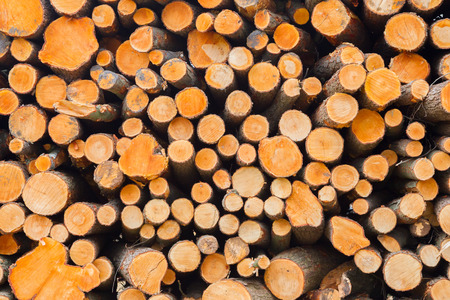 forestation: Forrest industry, stacked timber in a dutch forrest