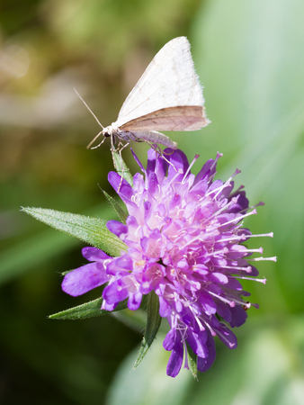 Small butterfly sucking on a violet flower, with blurred green leaves in the background