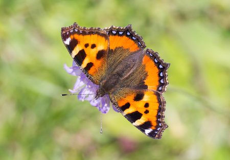 Close-up of a butterfly on a flower - Selective focus
