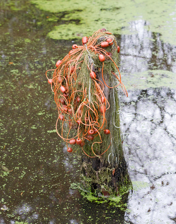 Old fishing net hanging in the water Banque d'images