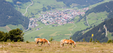 Two horses graze on pasture in the Alps, village in the background Standard-Bild