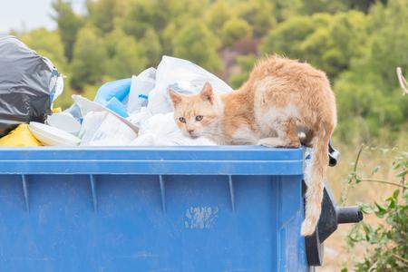 그리스의 쓰레기통 - 음식을위한 고양이 청소
