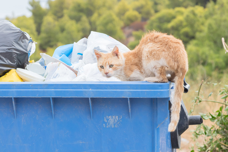 Garbage container in Greece - Cat scavenging for food