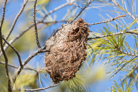Small nest hanging in a tree in Greece 스톡 콘텐츠