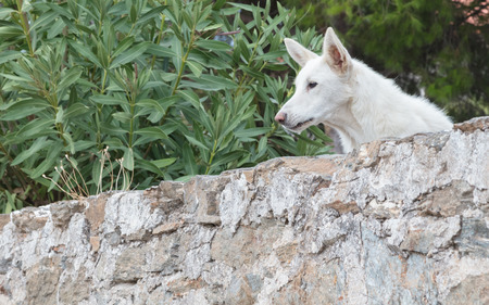 Dog guarding a private property in Greece Banque d'images