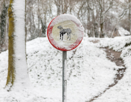 Sign in the bushes - dogs forbidden, covered in snow 스톡 콘텐츠