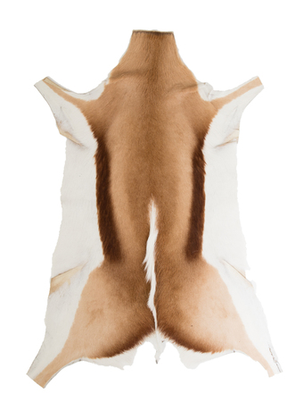 Skin of a springbok, isolated on white