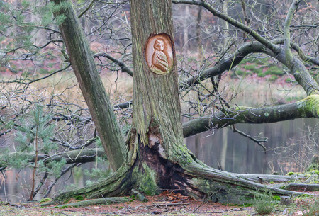Old wooden carved owl in a dutch forest