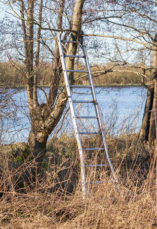 Metal ladder sustained by a tree, in the park, winter time