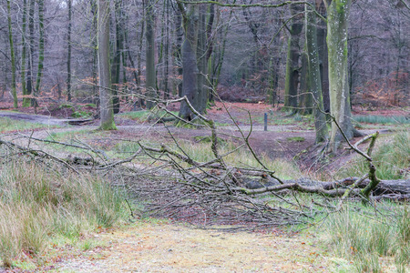 Tree fallen down by a strong storm blocks a path