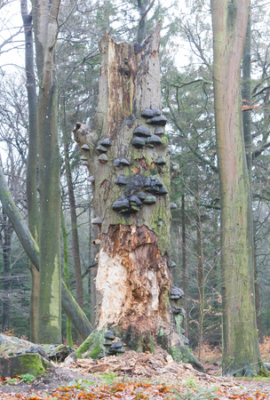 ushrooms growing on a tree stump in the woods