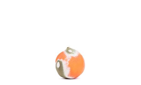 Moldy orange isolated on a white background