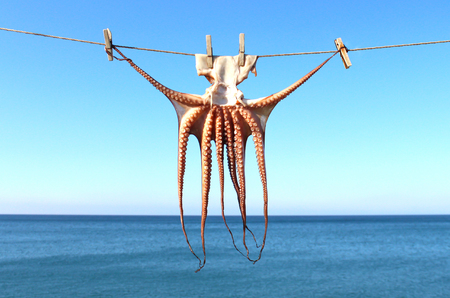 Drying squid in Greece, sea in background