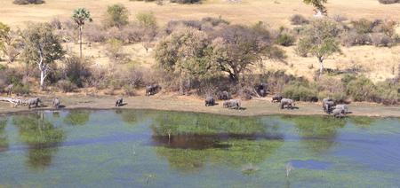 Elephants in the Okavango delta (Botswana), aerial shot Stock Photo