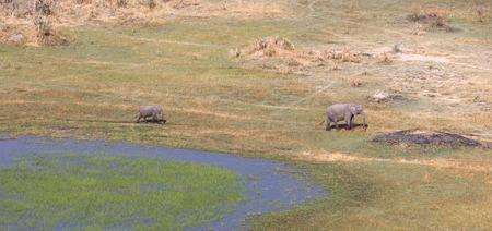 Elephant (mother and calf) in the Okavango delta (Botswana), aerial shot Stock Photo