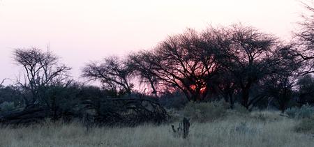 Pink sunset in the Makgadikgadi pans, Botswana Stock Photo