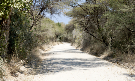 Sand road in Botswana - Road leading to the middle of nowhere Stock Photo