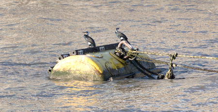 Cormorants on a large buoy in the river Thames, London Stock Photo