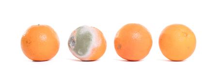 Rotten orange isolated on a white background